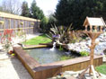 Beautiful surroundings for your cat during their stay at Millfields Cattery in Braintree, Essex