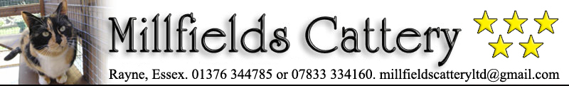 Millfields Cattery in Rayne, Braintree, Essex offer top quality care for your cats while you enjoy your holiday